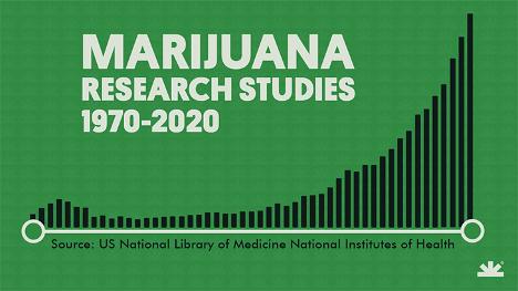 Marijuana Research Studies infographic